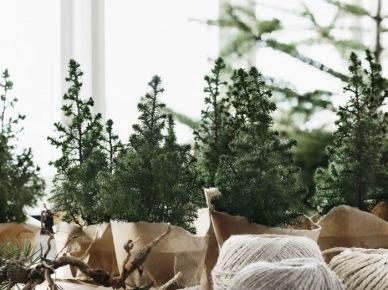 Zielone iglaste rośliny w eko dekoracji z jutowych worków na stole w jadalni (47845)