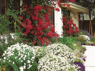 Ogród kwiatowy przed domem (15217)