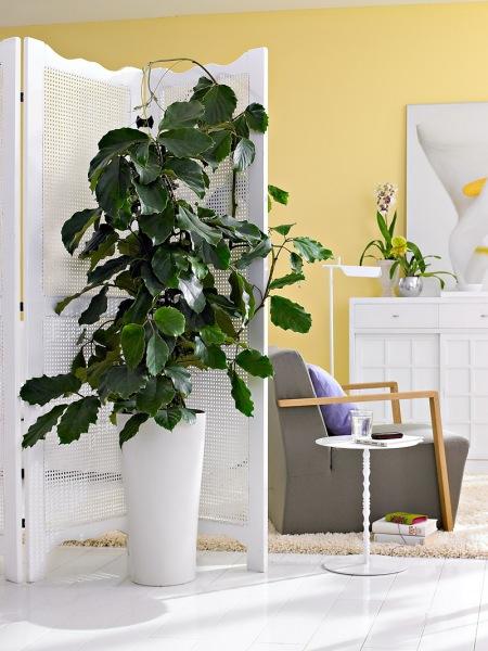 zielone ro liny w bia ej donicy za drewnianym zdj cie w. Black Bedroom Furniture Sets. Home Design Ideas
